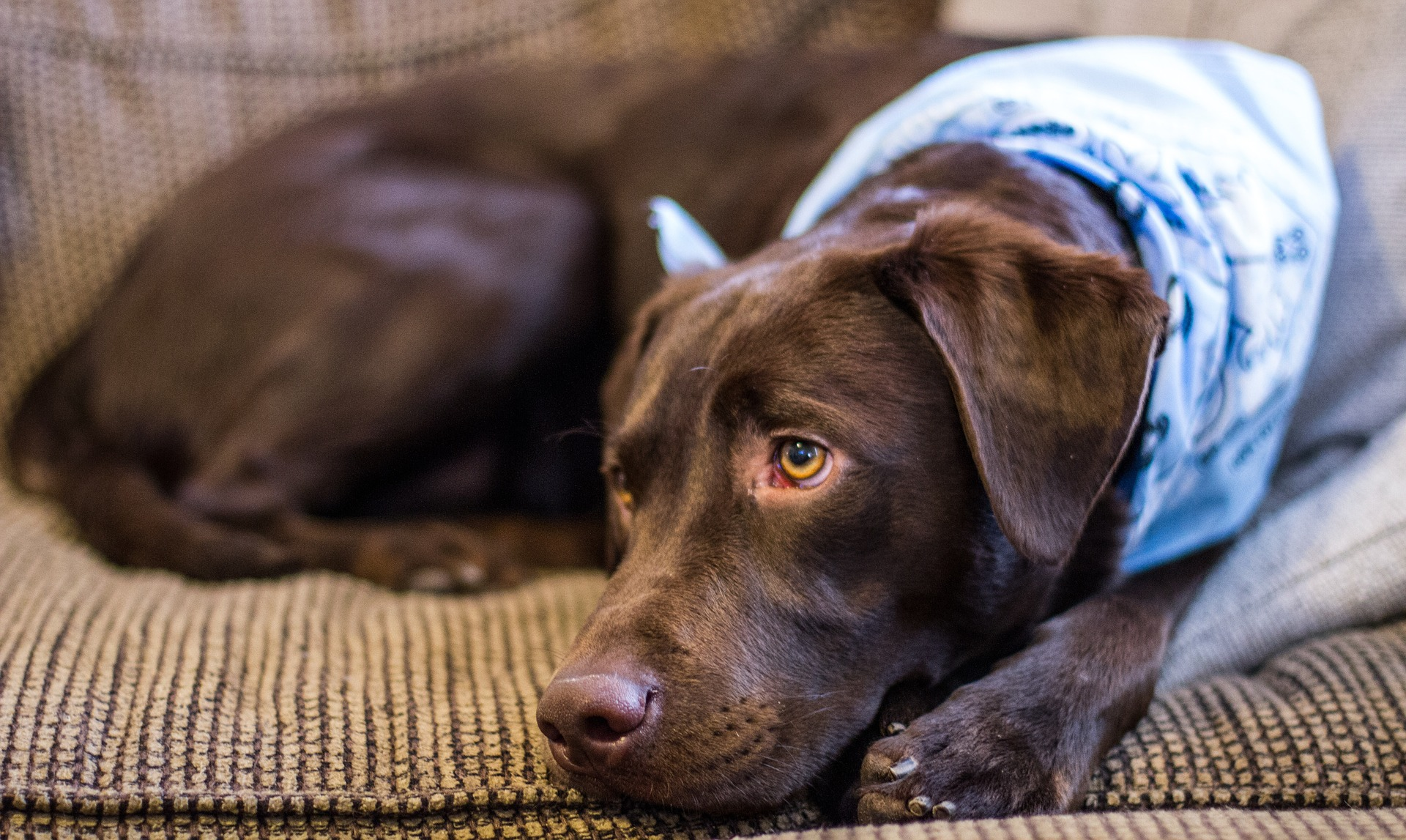 wel of geen hondenverzekering afsluiten